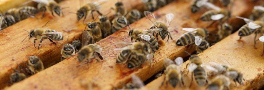 abeilles sur sommets des cadres